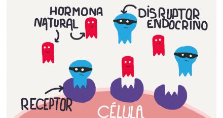 ¿Qué son los disruptores endocrinos?